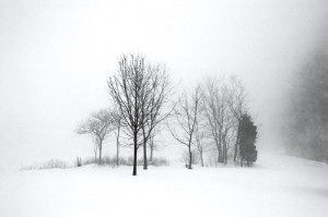 Winter Fog, Landscape, Black and White