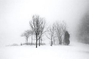 Winter Fog, Landscape, Black and White