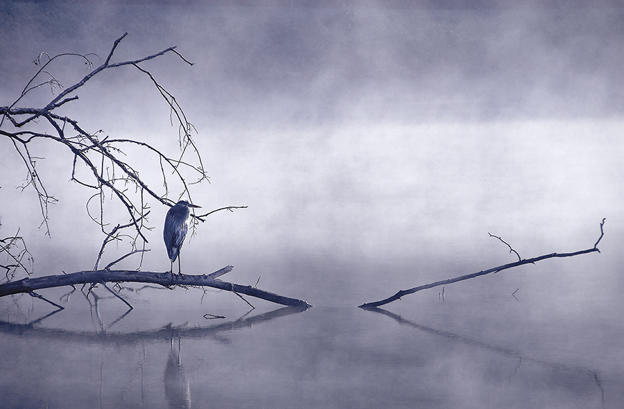 Heron Series No. 1; Butler Institute of American Art
