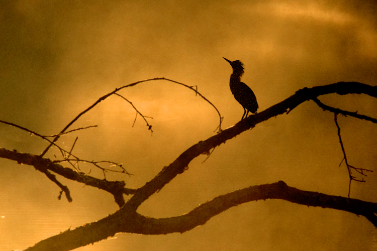 Kingfisher at Dusk